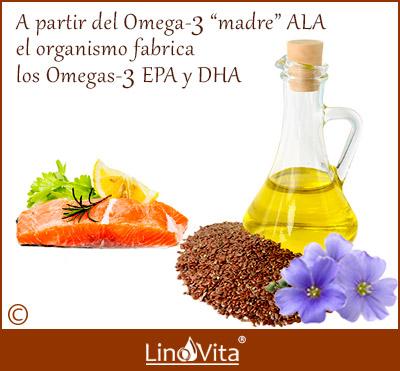 aceite de lino aporta tres tipos de omega 3 madre ALA EPA DHA