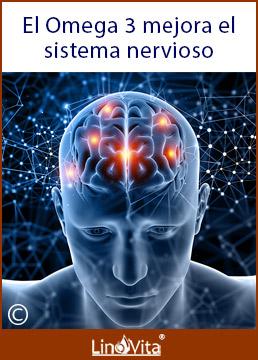 Omega 3 mejora el sistema nervioso y buena memoria