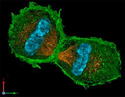 Imagen 3D de una célula división celular Imagen por Lothar Schermelleh