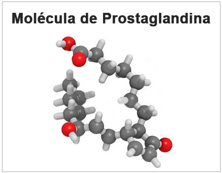 ¿Qué función tienen las prostaglandinas?
