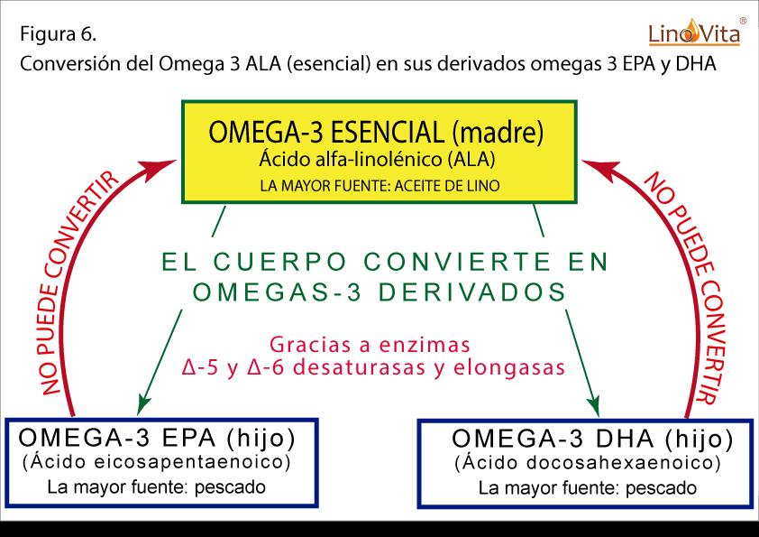 Figura 6 omega 3 ALA y sus derivados omega 3 EPA y DHA