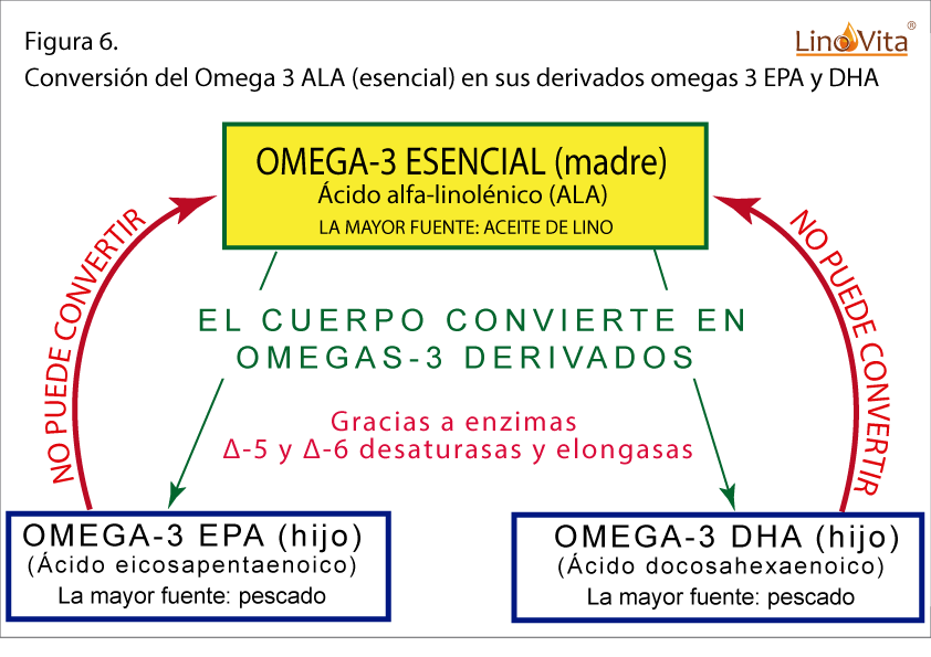 OMEGA 3 ALA Y SUS OMEGAS 3 DERIVADOS EPA Y DHA