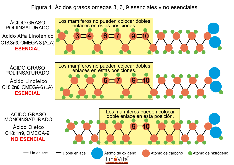 Ácidos grasos omegas 3 6 9 esenciales y no esenciales
