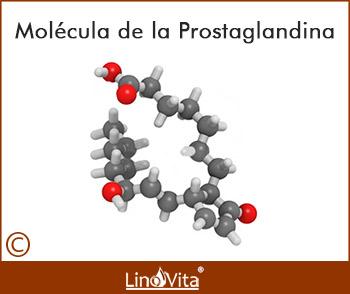 Que funcion tienen las prostaglandinas