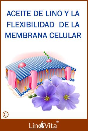 Aceite de lino rico en omega-3 y la flexibilidad de la membrana celular