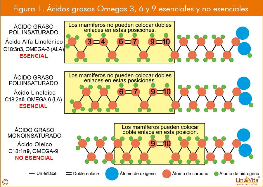 Figura 1 web acidos grasos omegas 3 omega 6 omega 9 esenciales y no esenicales linovita
