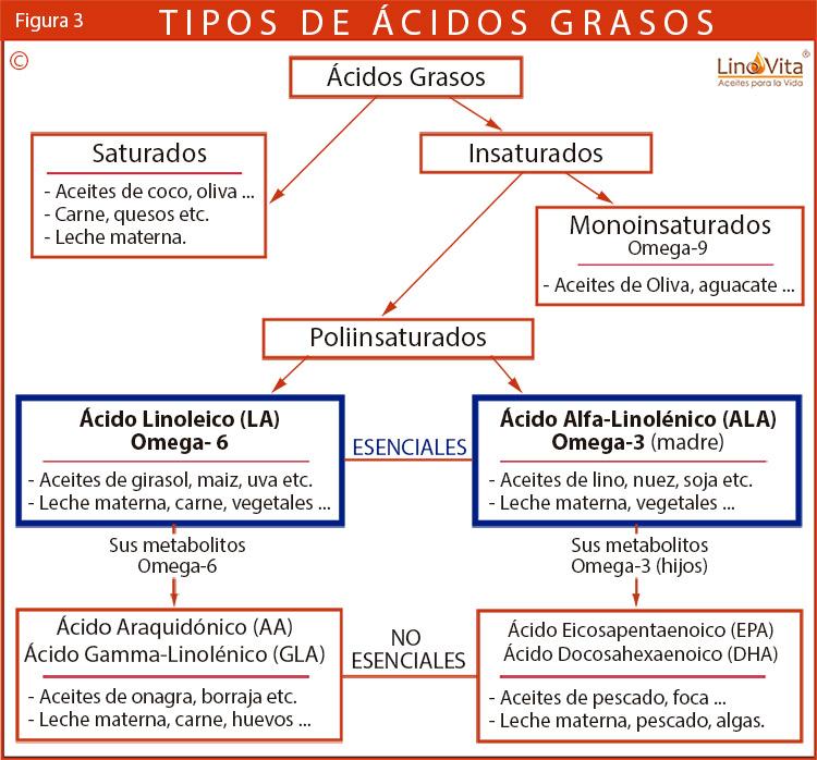Figura 3 tipos-de-acidos-grasos-omega-3-omega-6-omega-9-saturadas linovita