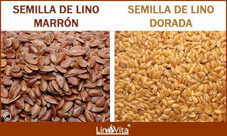Diferencia entre semilla de lino marron y dorada
